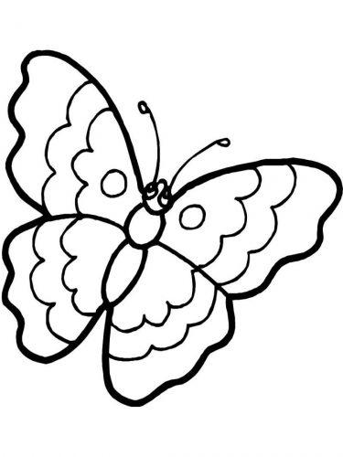 бабочка раскраска для детей12