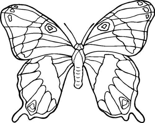 бабочка раскраска для детей14