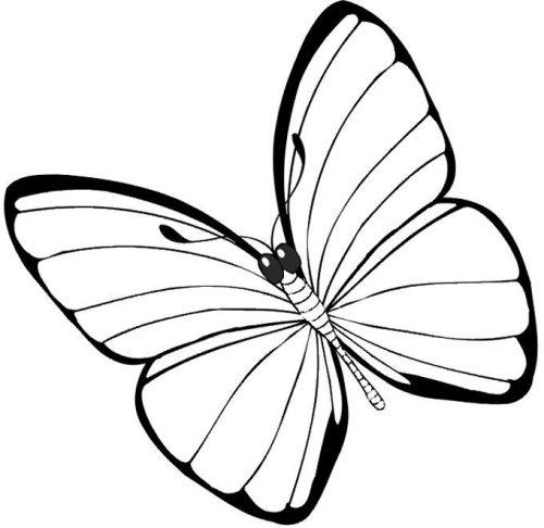 бабочка раскраска для детей15