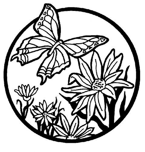 бабочка раскраска для детей4