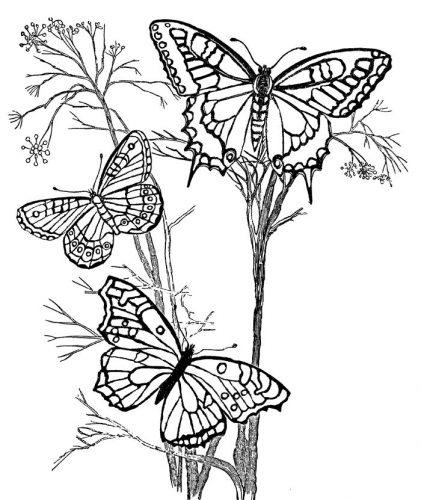 бабочка раскраска для детей10