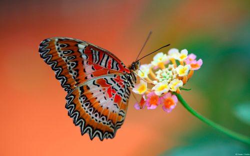 бабочки фото 11