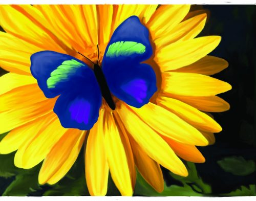 бабочки фото 13