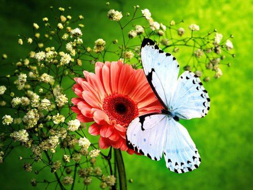 бабочки фото 14