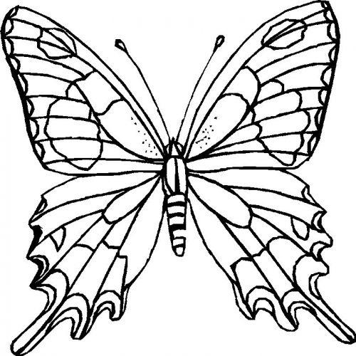 раскраска бабочка8