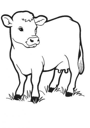 корова раскраска5
