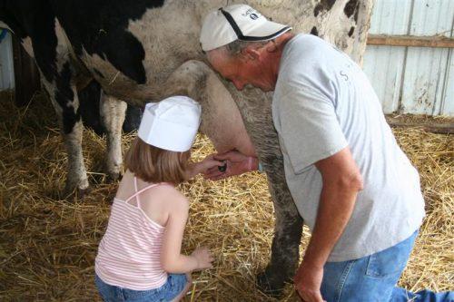 фото картинка коровы