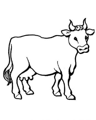 корова раскраска3