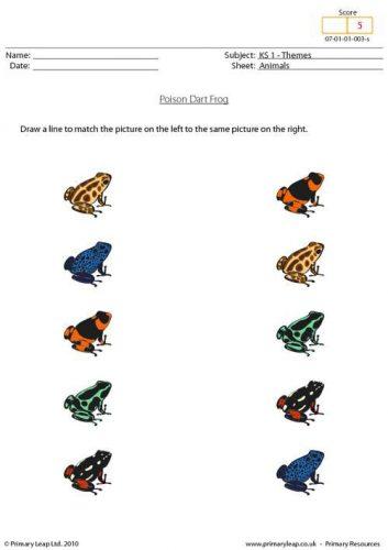лягушки картинки-игры
