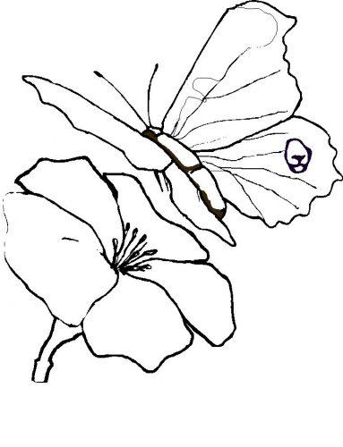 раскраска бабочка10