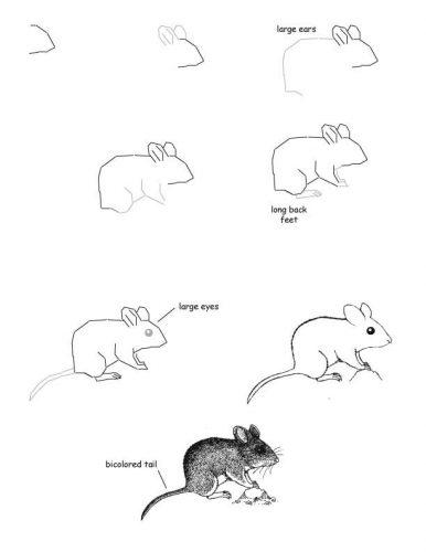 мышка по шагам карандашом4