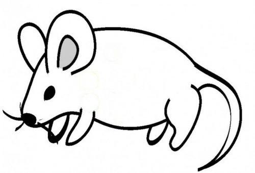 мышка раскраска4