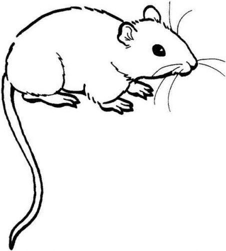 мышка раскраска8