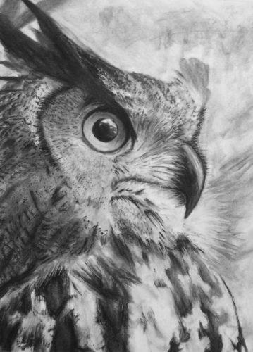 нарисованные совы картинки 3