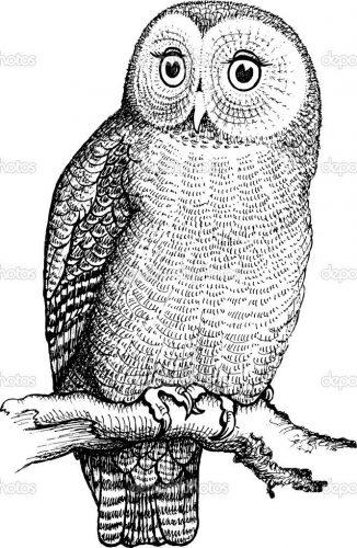 нарисованные совы картинки 4