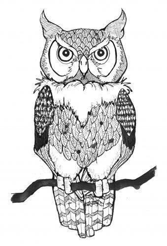 нарисованные совы картинки 6