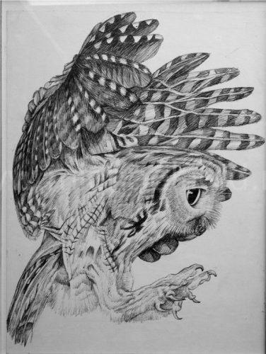 нарисованные совы картинки 7