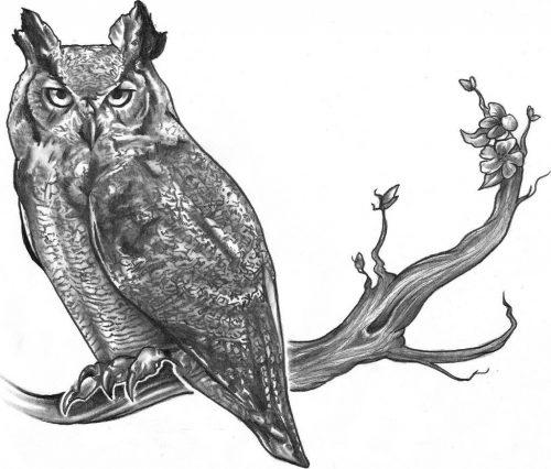нарисованные совы картинки 8