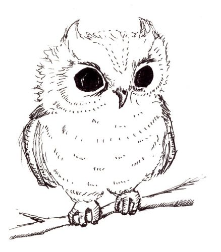 нарисованные совы картинки 9