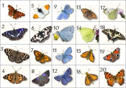бабочки с названиями