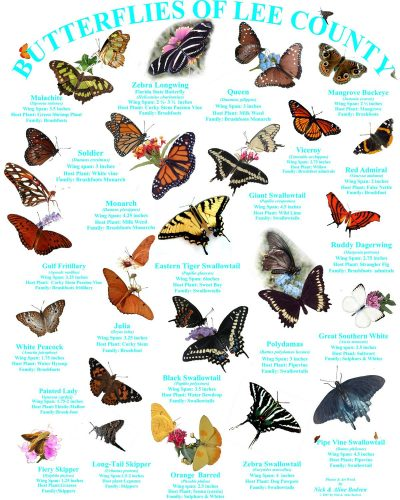 бабочки с названиями2