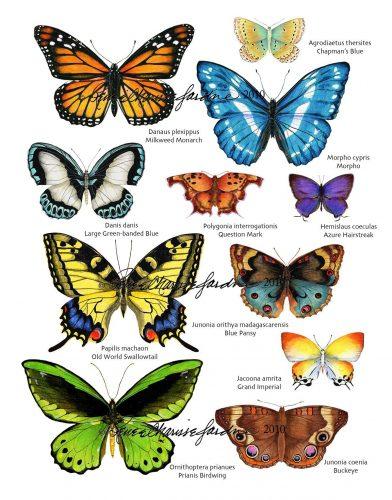 бабочки с названиями4