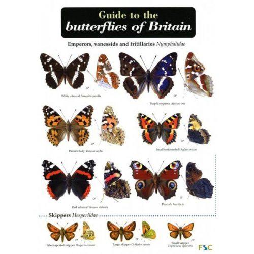 бабочки с названиями5