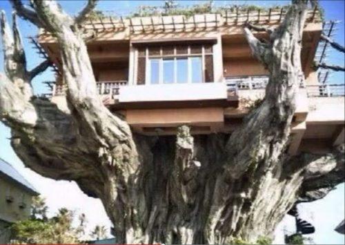 картинки необычных домов4