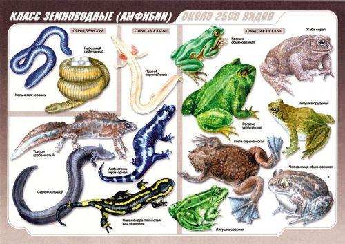 плакат картинка про лягушек