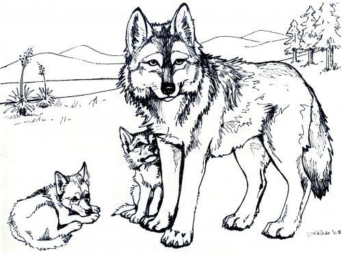 раскраска волк6
