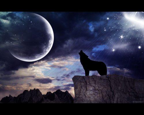 волк воет на луну2