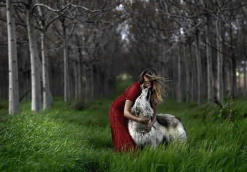 волк картинки для детей