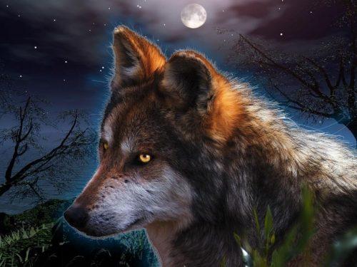 картинки волков фэнтези