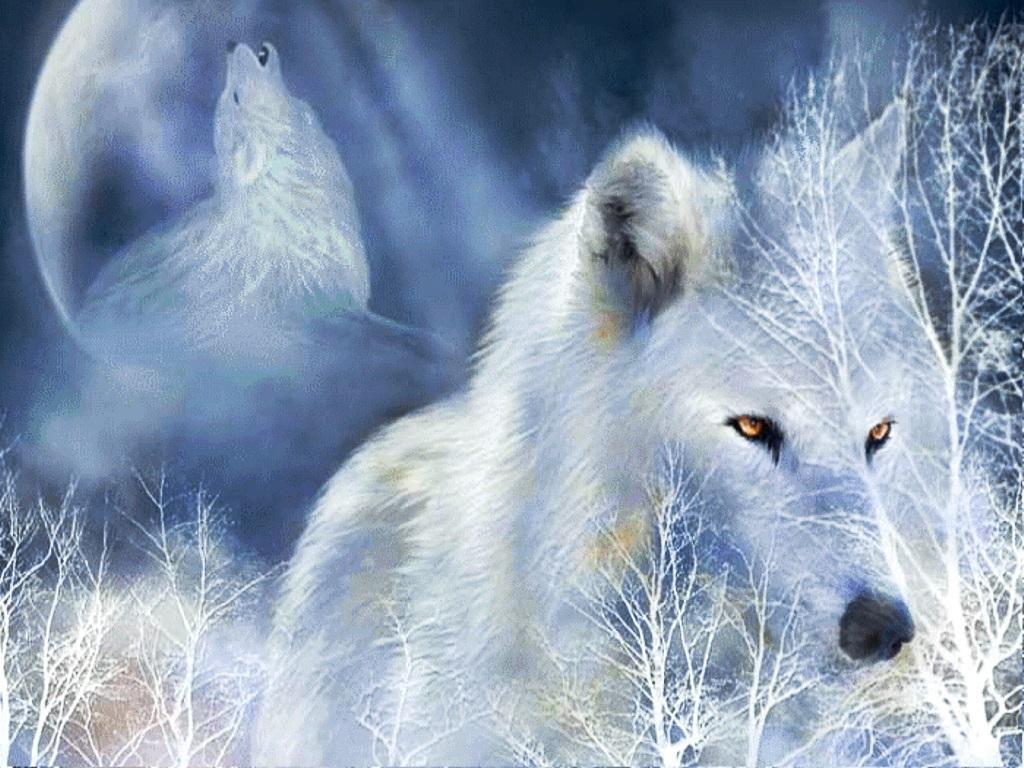 картинки белых волков ночью