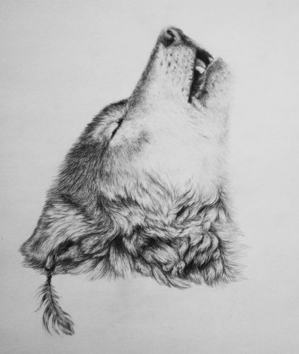 рисунок волк2
