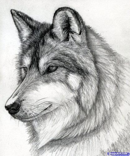 рисунок волк3