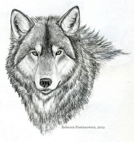 рисунок волк4