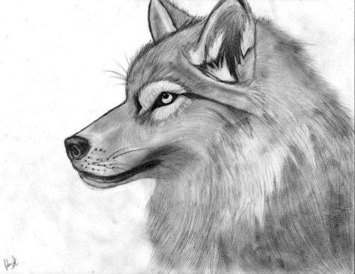 рисунок волк5