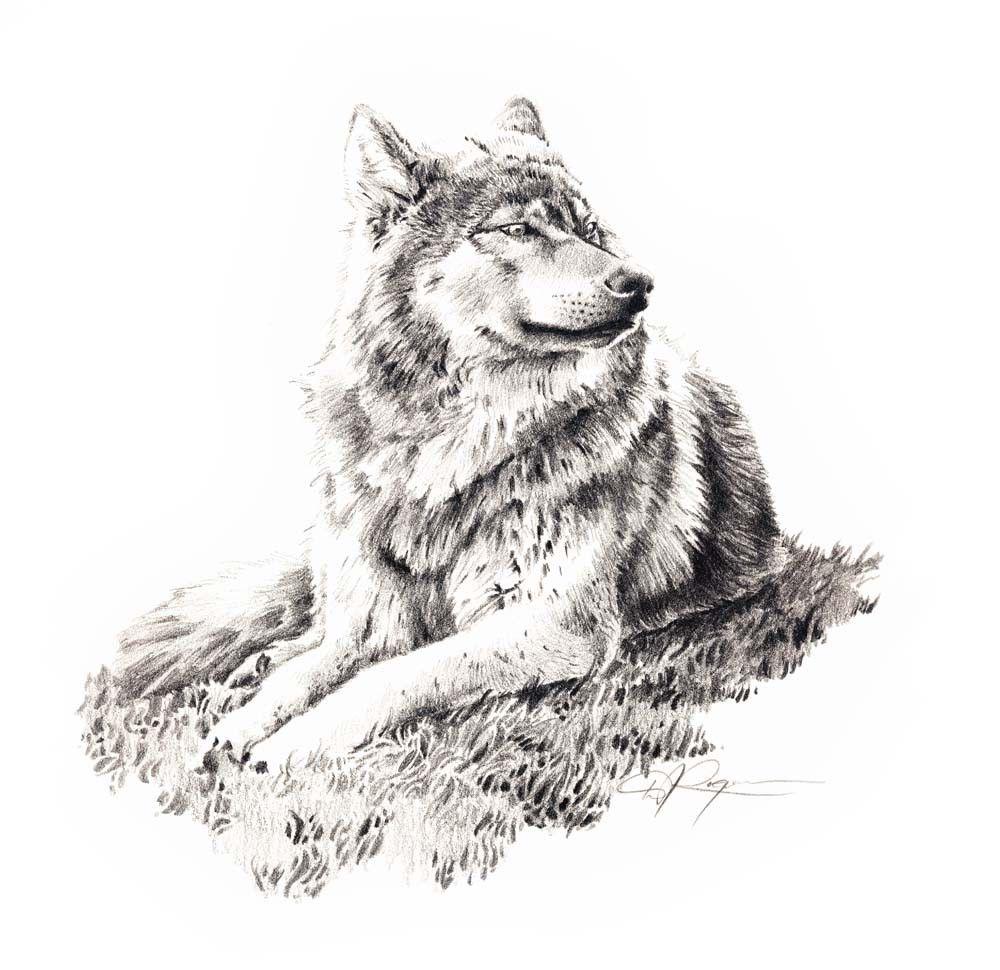 картинки волки черно-белые карандаш любом