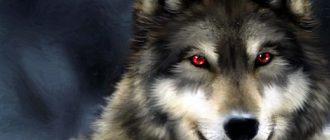 волк картинка