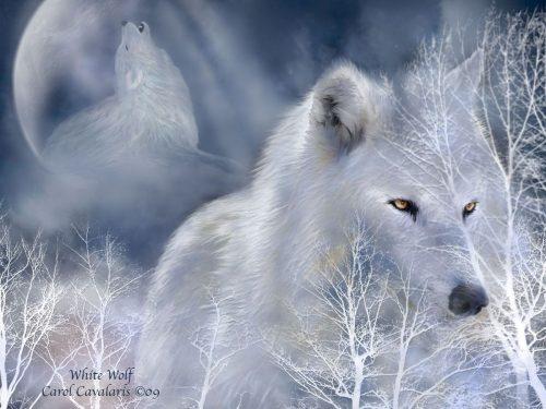 волк картинка5