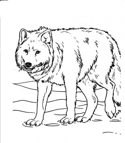 раскраска волк1