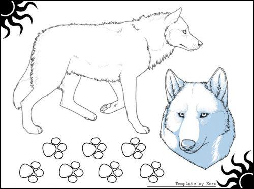 раскраска волк7 и его следы