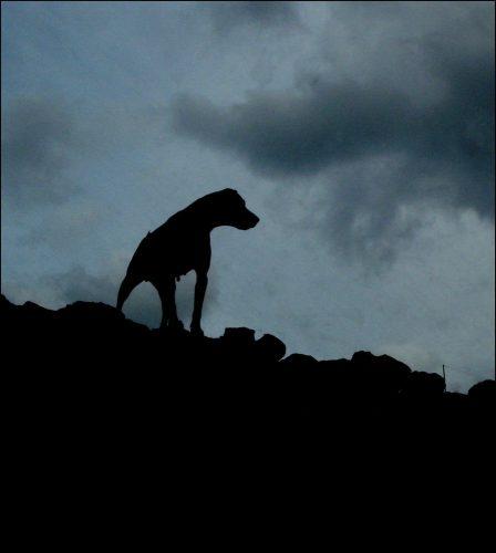 собака баскервилей картинки