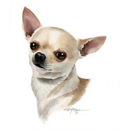 картинки собаки чихуахуа3
