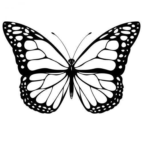 бабочка раскраска4