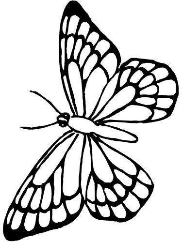 бабочка раскраска5
