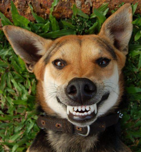 собака улыбка картинки2