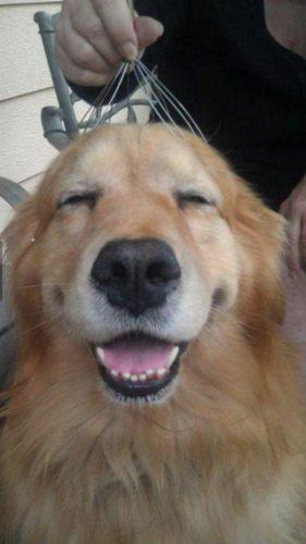собака улыбка картинки3