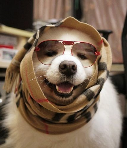 собака улыбка картинки5
